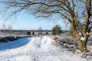 TOUR 18 – Winterwanderung in der Lüneburger Heide