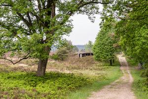 Schöne Wanderwege in der Lüneburger Heide